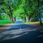 Pallakad by Pradeep